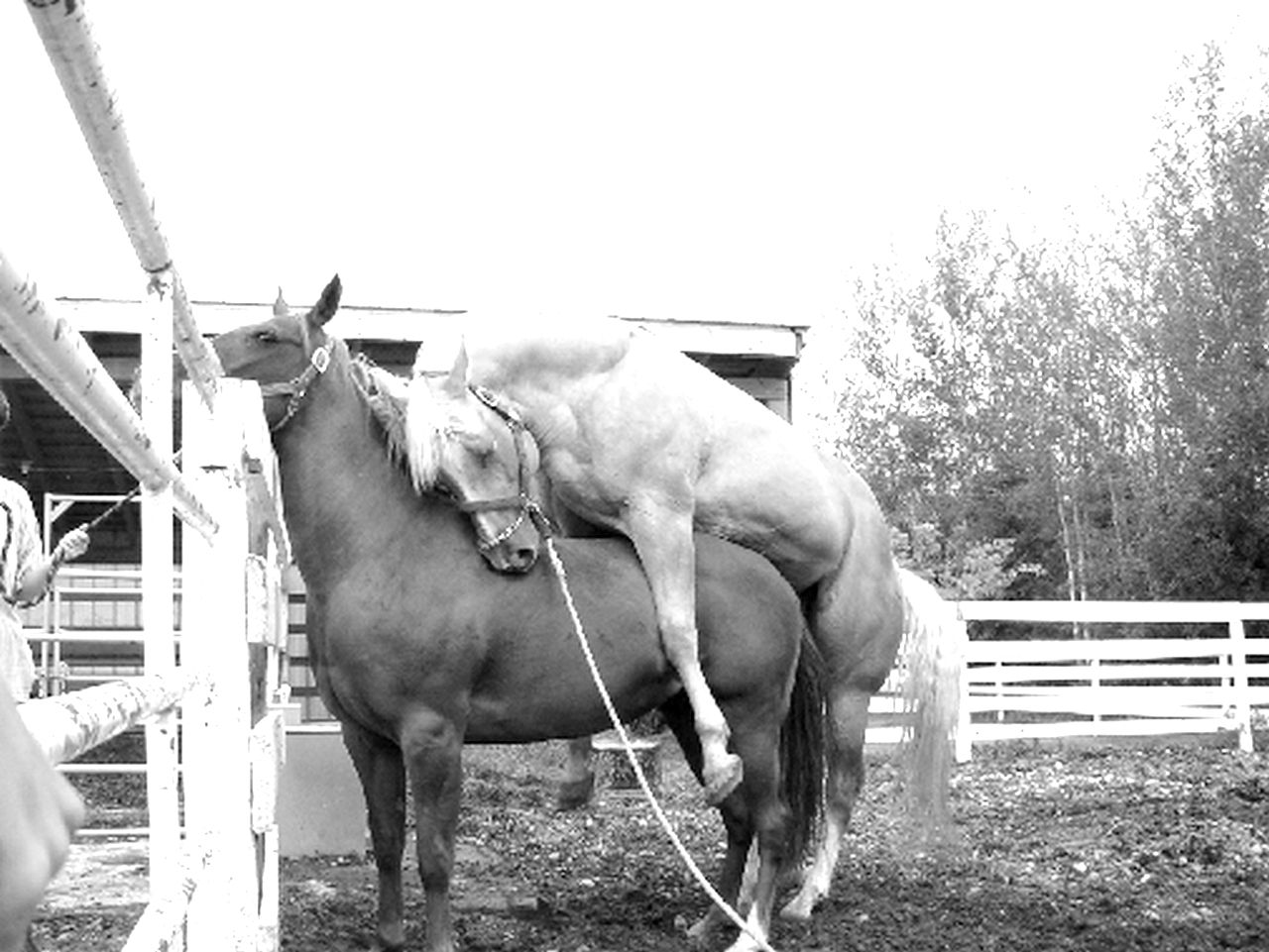 Приколы про лошадей (50 фото) .